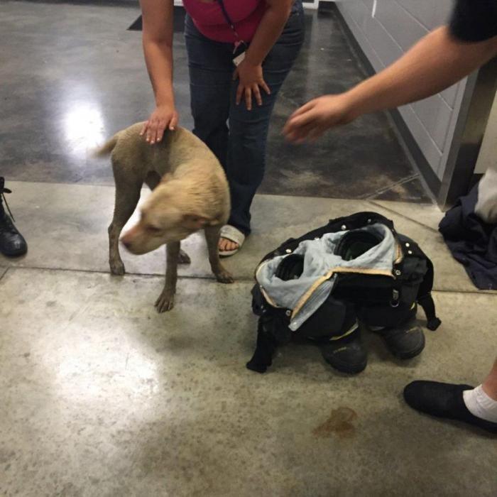 Спасение собаки, застрявшей в колесе