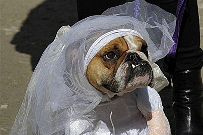 Как отвечать на вопрос: «Ну что, замуж вышла?»