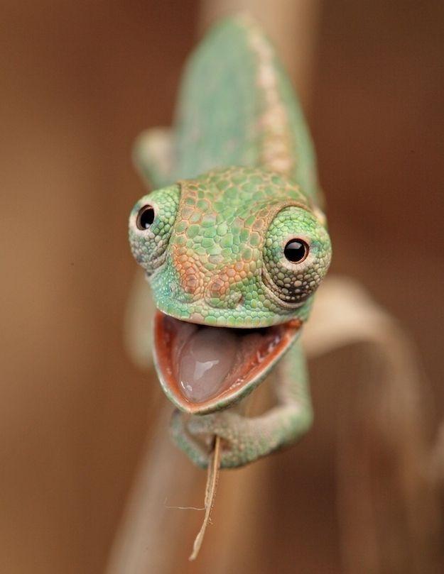 Животные, которые поднимут вам настроение (33 фото + 1 гиф)