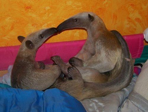 Животные пары (26 фото)