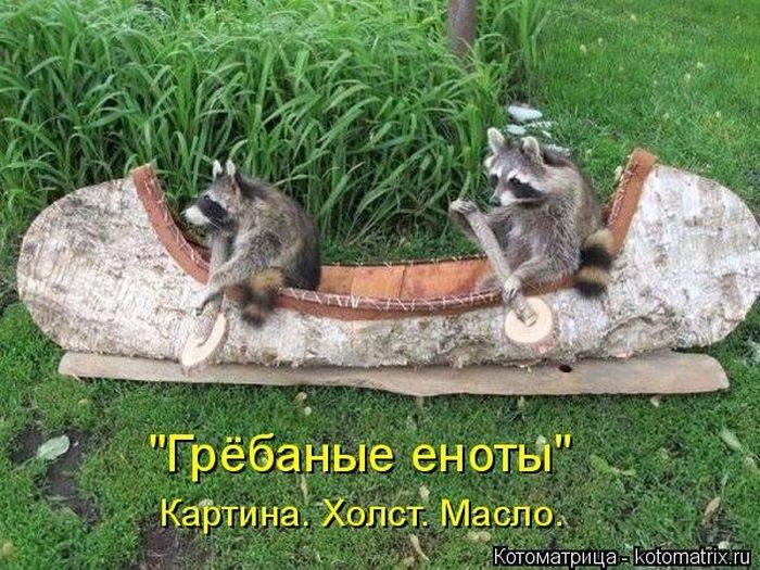 """""""Пушистые"""" шутки (50 фото)"""