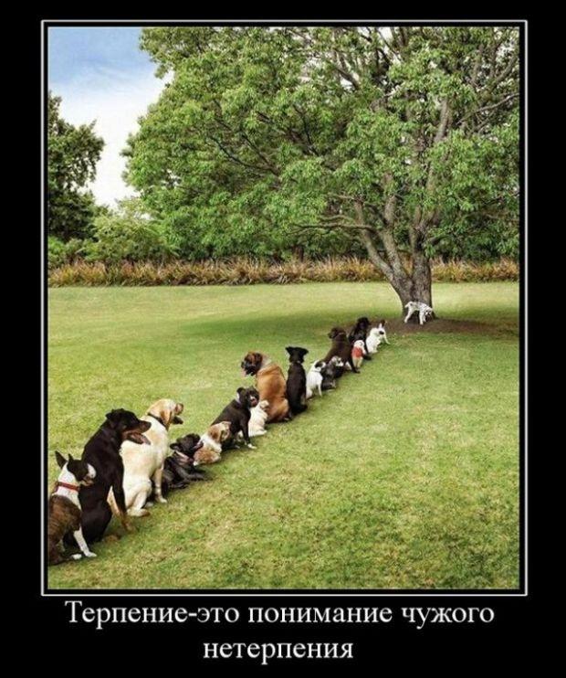 Коллекция смешных демотиваторов (30 фото)