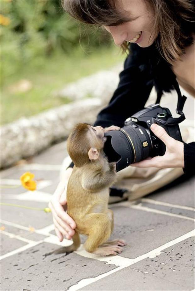 Настоящие фотоохотники (11 фото)