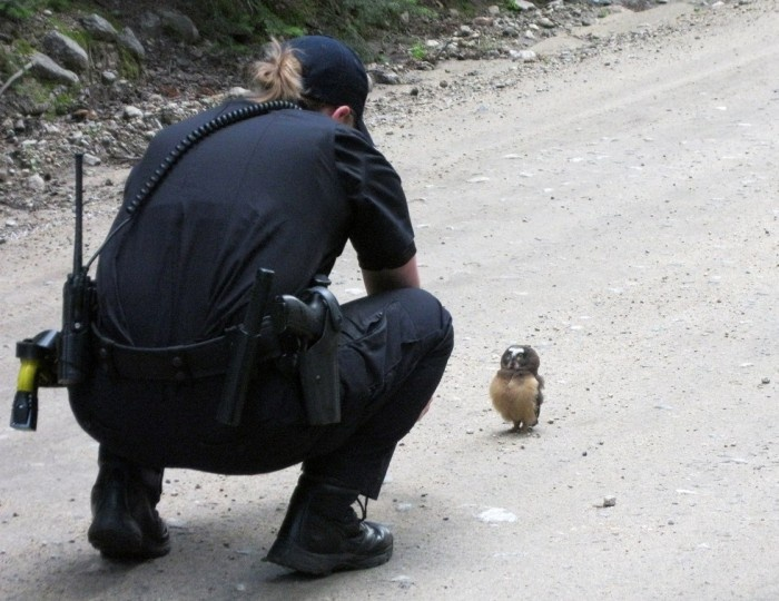 Совенок встал на пути полицейских