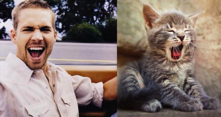 Коты и мужчины. Похожи не правда ли?