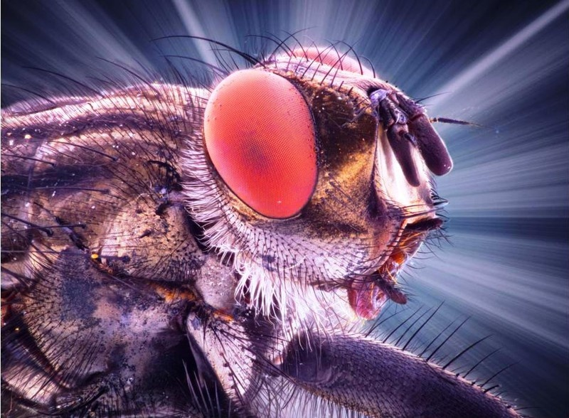 Увеличенные фото насекомых (8 фото)