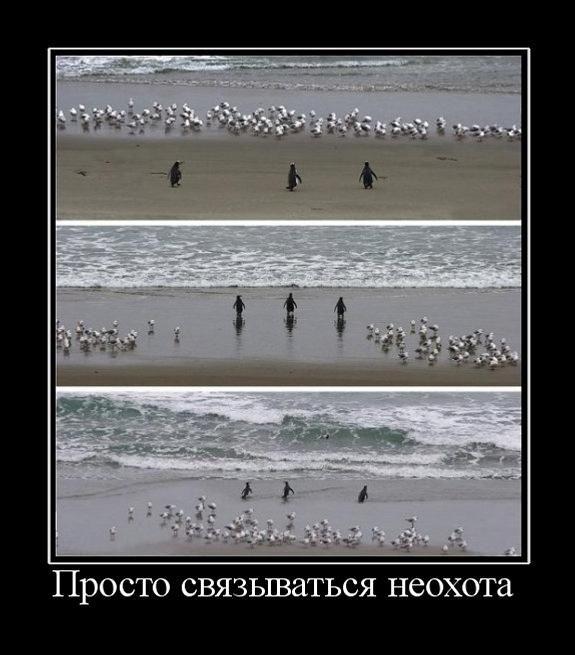 Коллекция демотиваторов (30 фото)