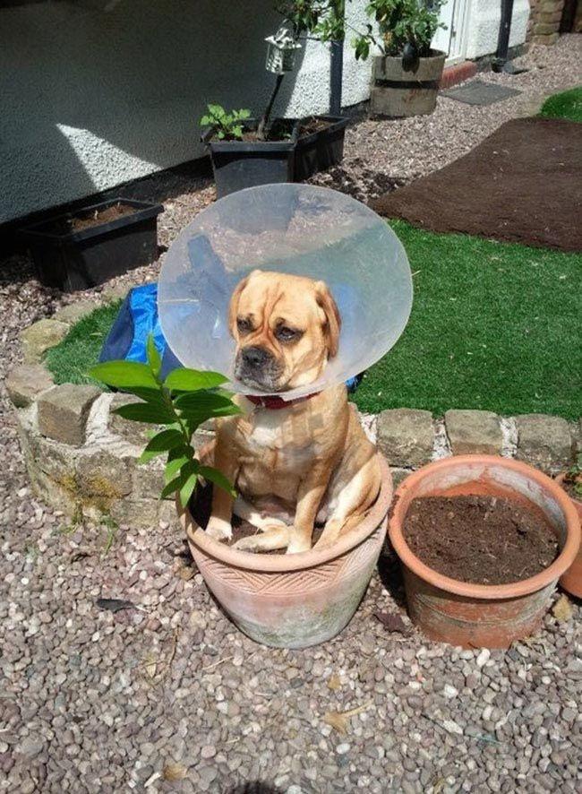 Собаки и их излюбленные места (32 фото)