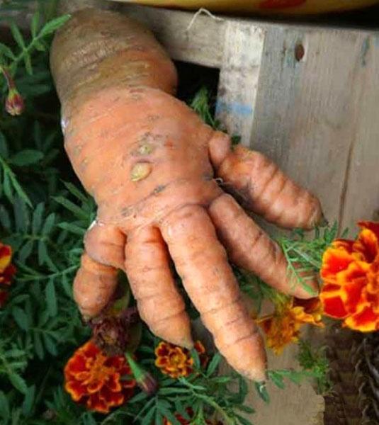 Чудо-овощи (17 фото)