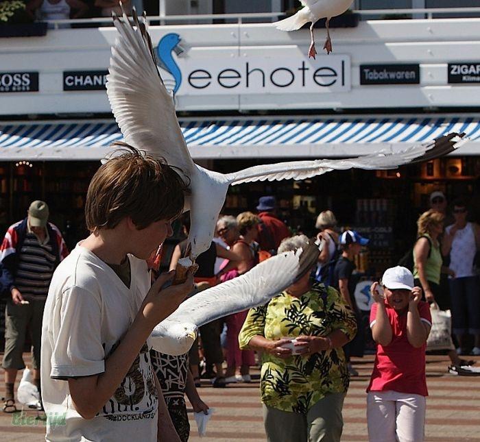 И птицы любят мороженое
