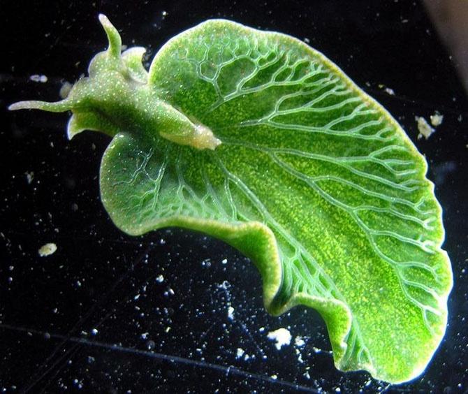 Слизняки похожие на растение
