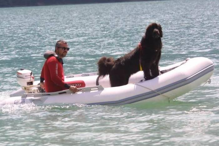 Незаменимый сотрудник береговой охраны – пес-спасатель