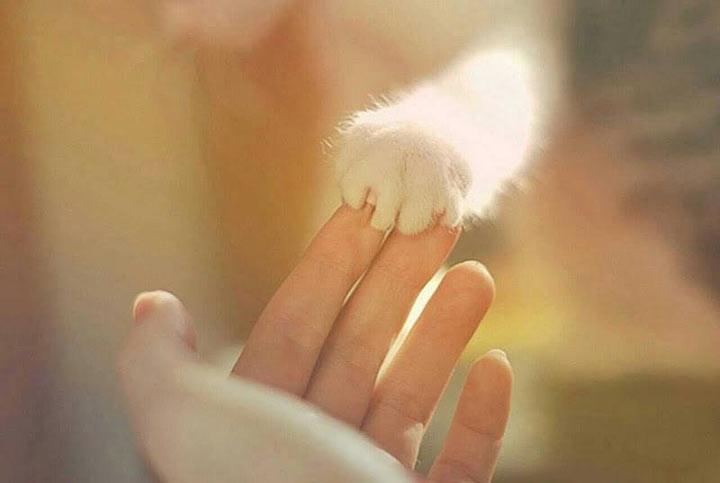Дай лапу друг на счастье мне... (13 фото)