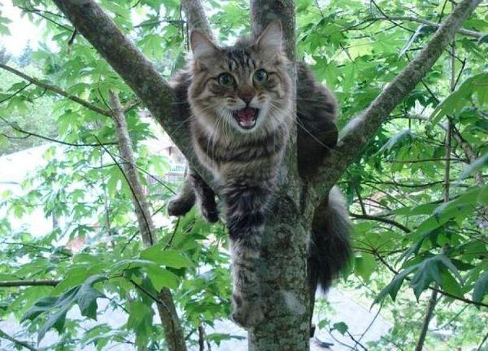 Инструкция, как снять кота с дерева