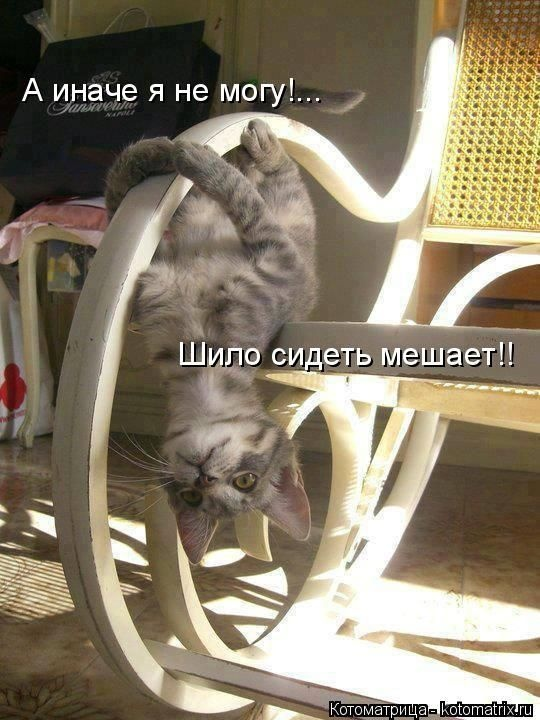Пушистый юмор (50 фото)