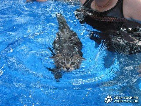 Водоплавающие коты (16 фото)