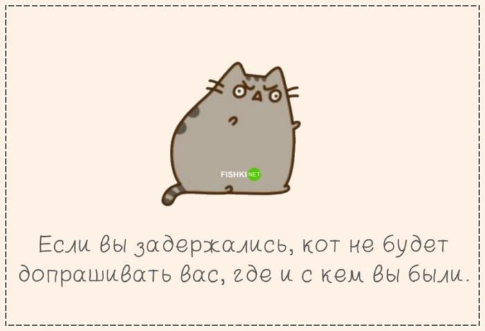 Почему стоит завести кота