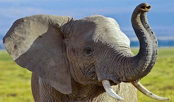 Любопытные факты о животных