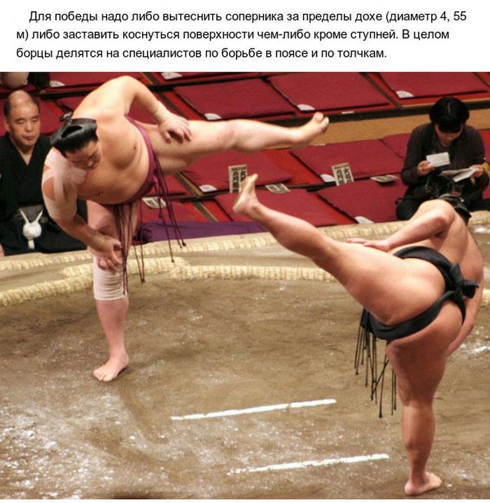 Факты о японской борьбе-тяжеловесов (10 фото)