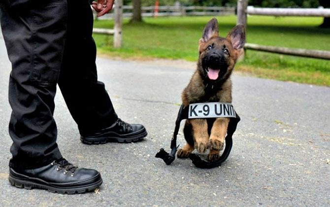 Правила для полицейской собаки