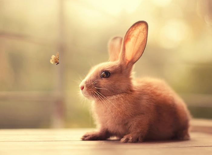 Фотопортреты кроликов (18 фото)