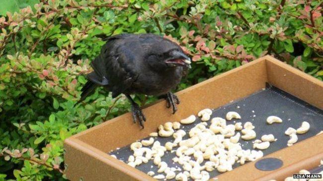 Подарки от птиц
