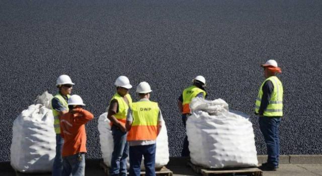 Выпустили 96 миллионов пластиковых шаров для защиты водохранилища