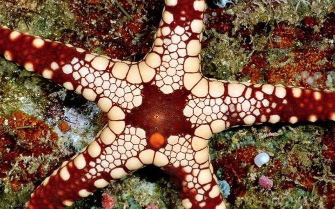Занимательные факты о морских звездах