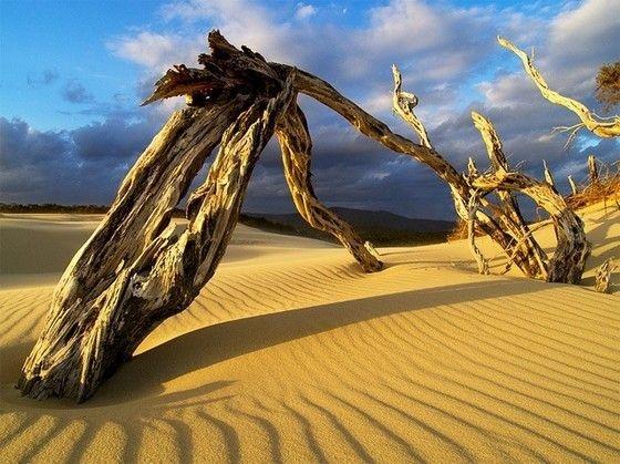 В пустыне есть жизнь