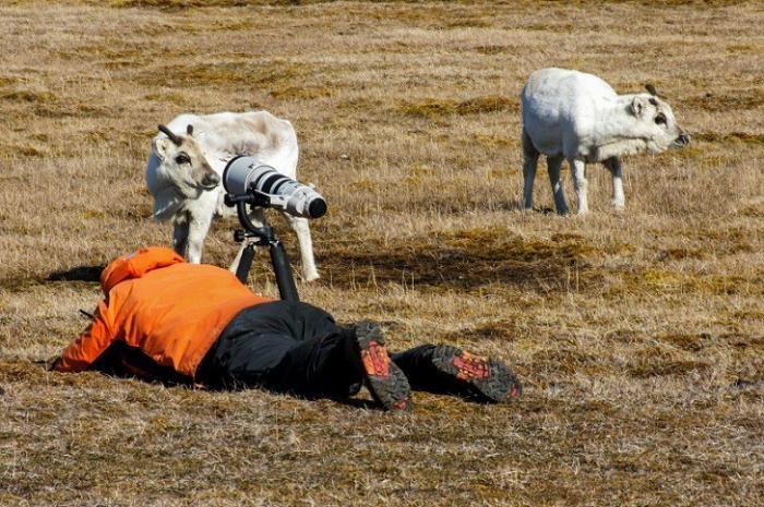 Подборка уморительных селфи животных (23 фото)