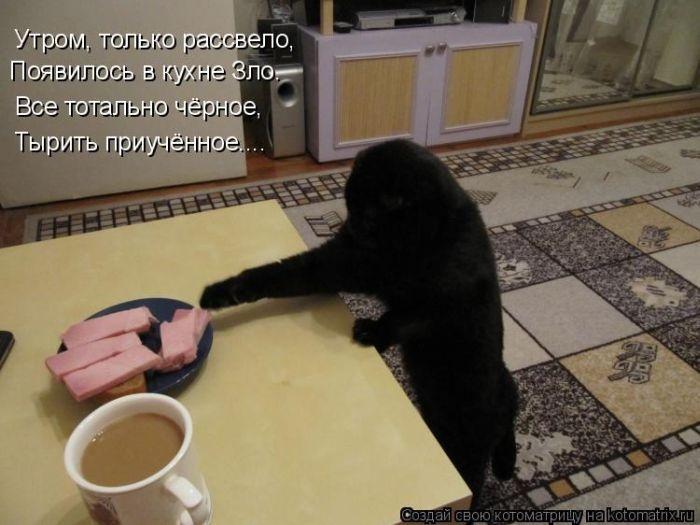 Смешные фотографии котов (50 фото)