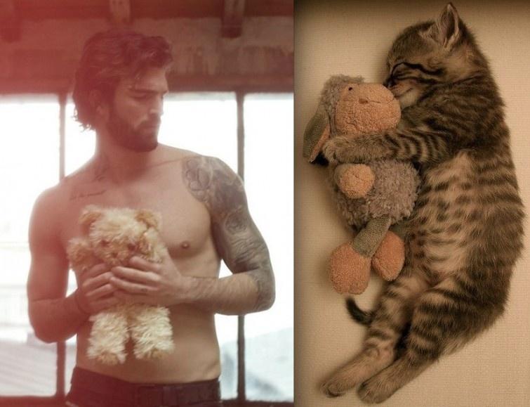 Кошачьи пародии на фото (23 фото)