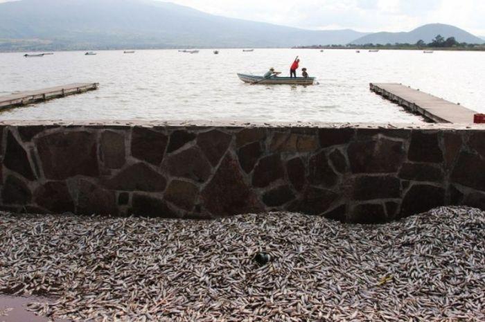 Экологическая катастрофа в Мексике