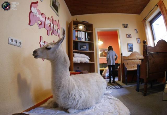 Необычные домашние животные для необычных людей