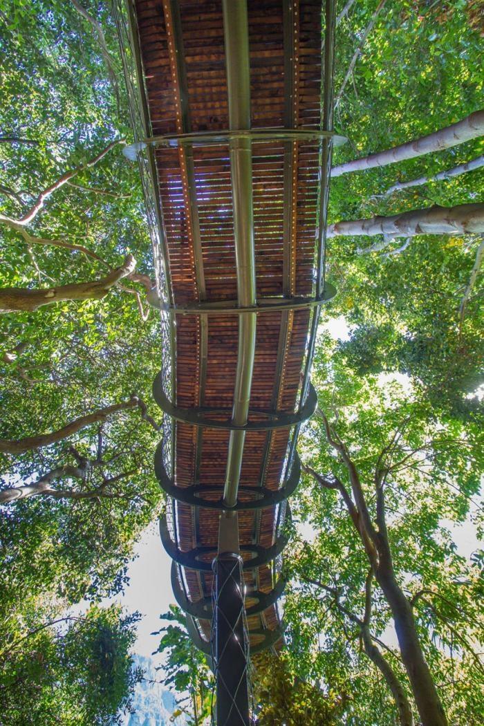 Подвесная тропинка над деревьями (10 фото)