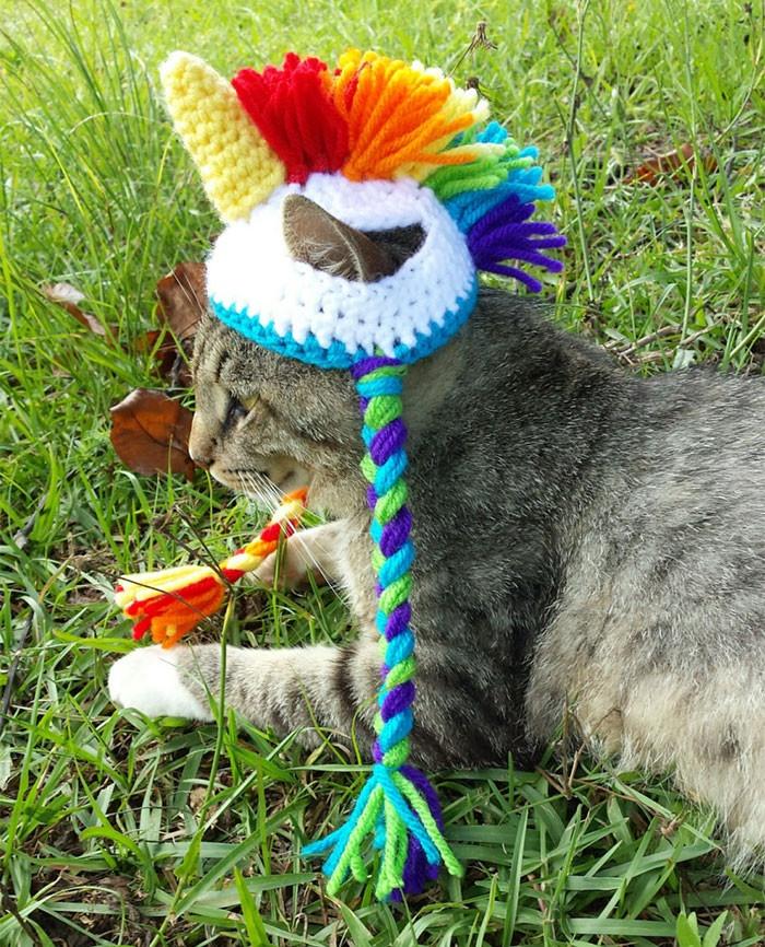 Забавные вязаные шапочки для животных (20 фото)