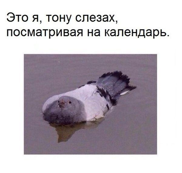Подборка прикольных картинок (91 фото)