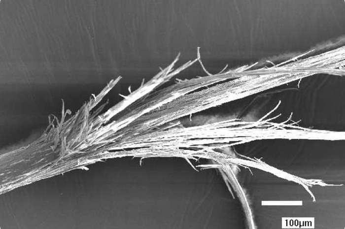 Наш организм под микроскопом