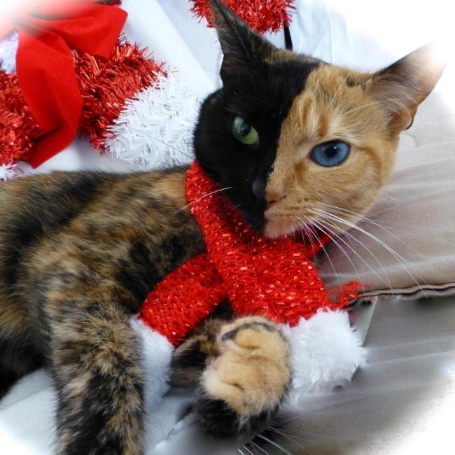 Кошки с необычным окрасом (13 фото)