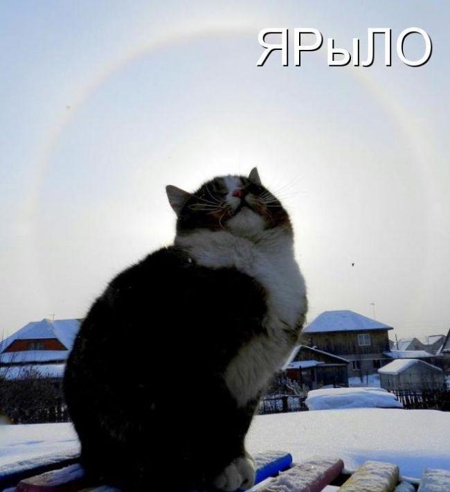 Котоматрица (50 фото)