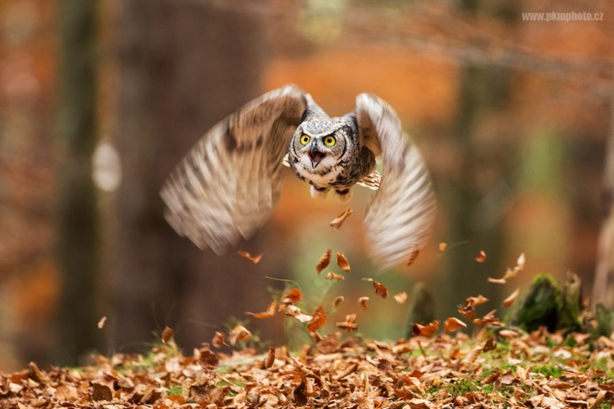 Осень в красочных фотографиях