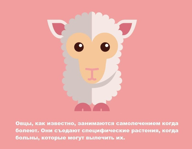 13 интересных фактов о животных