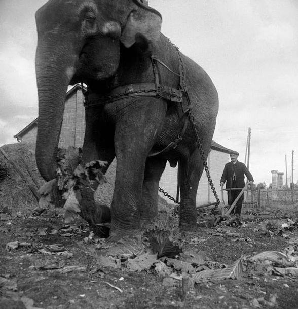 Фотофакты Второй мировой войны (9 фото)