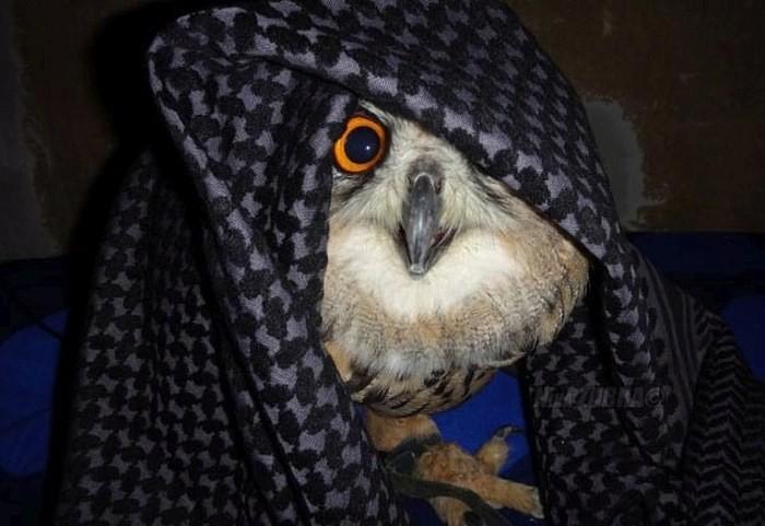 Милая сова (6 фото)