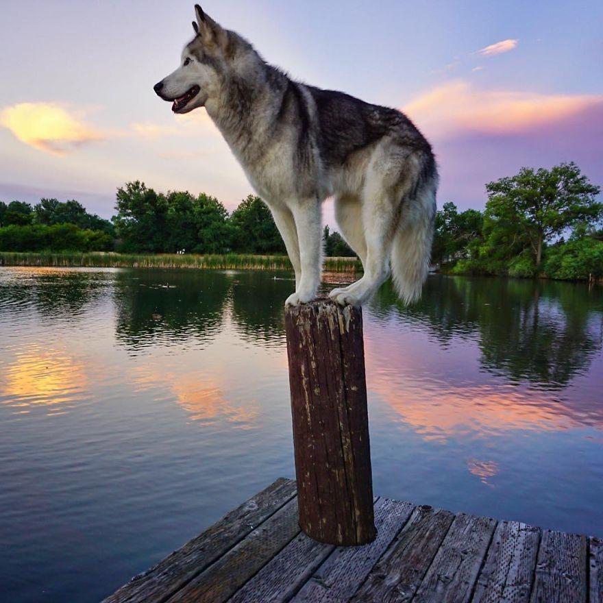 Приключения собаки Локи (27 фото + 1 видео)