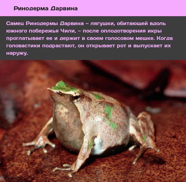 Животные и насекомые со странным сексуальным поведением (10 фото)