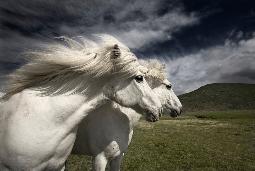 Необыкновенные фотографии лошадей