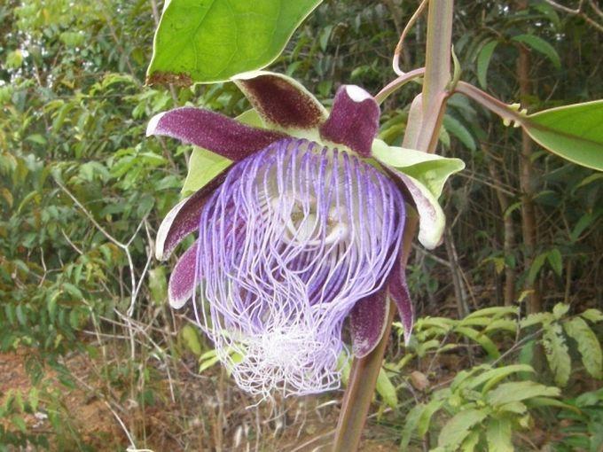 Удивительная природа Амазонии