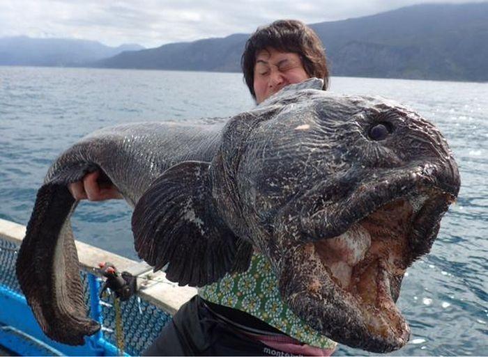 Жуткая рыба, пойманная у Фукусимы (2 фото)