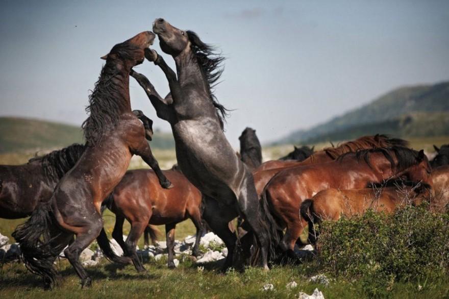 Необыкновенные фотографии живой природы